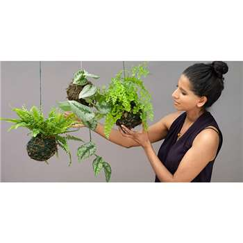 Online Kokedama (sustainable moss garden) class. We'll post you the kit!